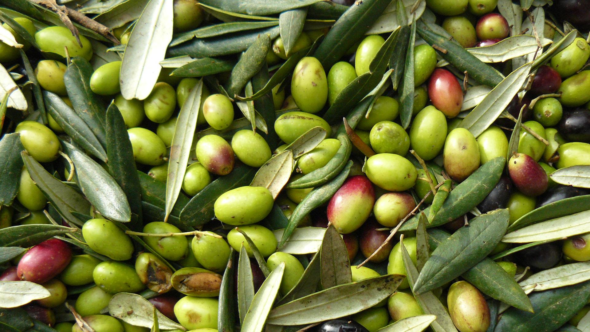 Minicorso di degustazione olio extra vergine d'oliva